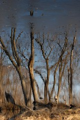 waterworld (courtney065) Tags: nikond200 nature landscapes pondscapes wetland river trees branches reflections blurred bokeh artistic textures water winter winterreflections earthy brown blue grasses pondgrasses foliage flora sky painterly