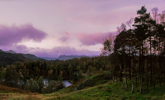 Tarn Hows and the Langdale Pikes (GDSinclair) Tags: tarn hows great langdale pikes lake district cumbria lakes tarns forest woods sunset evening autumn september october fuji velvia 50 6x7 medium format mamiya rb67 film photography uk mountains colour