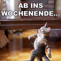 Wochenende! (berniepcooper) Tags: wmlz witze meme lustiges zitate f18