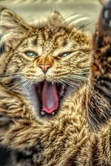 0001 (gill4kleuren - 17 ml views) Tags: pussy puss poes chat mieze katje gato gata gatto cat pet animal kitty kat pussycat poezen