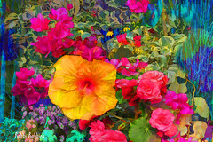 Summer Melody (brillianthues) Tags: flowers floral flower garden hibiscus begonias nature colorful collage photography photmanuplation photoshop