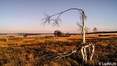 Wild East Belgium (oct 2018) (Lцdо\/іс) Tags: october octobre 2018 highes fens hautesfagnes fagnes fagnard eifel belgique belgium eastbelgium treking walk wild voyage waimes