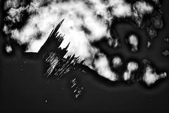 End here (Phancurio) Tags: tree woods closeup monochrome