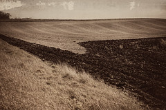After the Harvest (Dave Linscheid) Tags: farm rural country agriculture plowed stubble texture textured landscape picmonkey butterfield watonwancounty mn minnesota usa field sepia