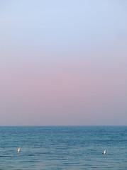 07.11.18 (Kirby_Wilson) Tags: morning sea swan swans skåne sweden balticsea blue calm