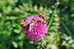 Bees (Hugo von Schreck) Tags: hugovonschreck tamron28300mmf3563divcpzda010 canoneos5dsr