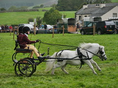 Flying Along (Karls Kamera) Tags: pony carriage driving loweswater show