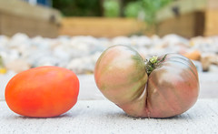Heirloom Tomatoes (Adrian Tranquilino) Tags: garden vegetables farms food eat heirloomtomatoes 365project2018 tomatoes drinks cofee comfort healty