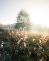 Bosch (28 of 32) (VarsAbove) Tags: kampinos kpn kampinoski park narodowy fog mist mgła morning sunrise dawn wschód polska poland łoś moose sony sonya7 a7ii coffe milkyway