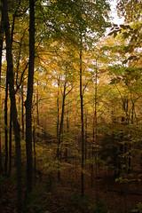 IMG_6314 (sjj62) Tags: fishcreekwi doorcountywi fall autumn woods doorcounty fishcreek 40d