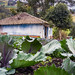 A house with cabbages in Obonuco - Nariño