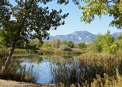 Sawhill Ponds (Boulder Flying Circus Birders) Tags: sawhillponds cityofboulderopenspaceandmountainparks colorado gunbarrel wildbirdboulder wildbirdcolorado boulderflyingcircusbirders freebirdwalk saturdaymorningbirders bouldercounty janebaryames