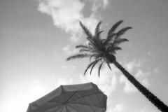 Memories - Minorca - July 2018 (cava961) Tags: minorca analogue analogico monochrome monocromo bianconero bw