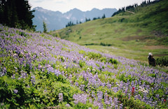 magic and meadows, part one (manyfires) Tags: film analog mtrainier mtrainiernationalpark mountrainier mountrainiernationalpark landscape mountains nwoutdoors outdoors nature hike hiking pnw pacificnorthwest summer nikonf100 35mm alpine meadow wildflowers blossom bloom lupine