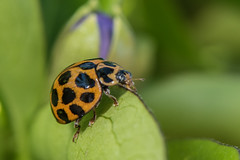 D75_5183 (crispiks) Tags: its bugs life insects macro close up nikon d750 micro 105mm 28 r1c1
