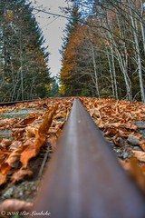 Shawnigan Rail Series (Per@vicbcca) Tags: sony ilce7m2 a7ii railway rails rail shawniganlake britishcolumbia vancouverisland canada autumn fall color colores colour