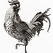 A Cock by Johan Teyler (1648-1709). Original from the Rijks Museum. Digitally enhanced by rawpixel.