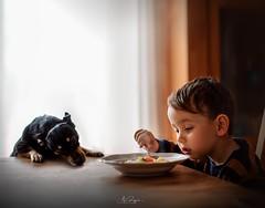 Tessa, NO (agirygula) Tags: childhood childhoodmemories eat soup dog zwergrehpinscher tessa fun family familytime light availablelight sony 50mm
