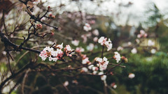 Germany, Darmstadt (marina.arriva) Tags: d3000 blur home germany darmstadt retro texture vintage pink simple green warm nikon