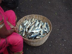 Salt fish mackerels (joegoauk73) Tags: joegoauk goa fish market wholesale road panjim panaji