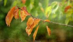 L'automne arrive ! (mamietherese1) Tags: magicunicornverybest artdigital world100f
