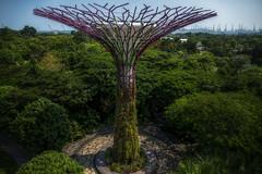 Gardens by the Bay (emptyseas) Tags: gardens by bay singapore emptyseas nikon d800 supertrees