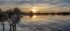 Coucher de soleil sur l'étang de Ginès 2 (Xtian du Gard) Tags: xtiandugard sunset reflet lac etang waterscape eau coucherdesoleil camargue provence nature paysage landscape panorama nuages clouds