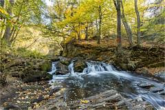 Herbst im Harz (gsegnet) Tags: herbst wald bäume trees sonne sun wasser water bach wasserfall waterfall autumn forest deutschland norddeutschland harz mittelgebirge selkefall nikond850 tamron 1530