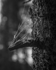 IMG_0454 (agianelo) Tags: spider bark branch monochrome bw bn blackandwhite