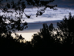 Waiting For Sunrise. (dccradio) Tags: lumberton nc northcarolina robesoncounty outdoor outdoors outside saturday morning earlymorning goodmorning october autumn fall tree trees foliage silhouette sky clouds morningsky beauty beautiful pretty godshandiwork godscreation nature natural treebranch branch branches treebranches treelimb treelimbs scenic landscape canon powershot elph 520hs