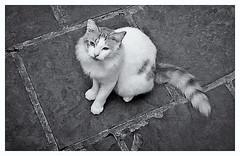 Pentax Auto 110 (1978) (Black and White Fine Art) Tags: pentaxauto1101978 pentax11024mmf28 pentax aristaedu100 kodakd76 110format formato110 sanjuan oldsanjuan viejosanjuan puertorico bn bw cat gato