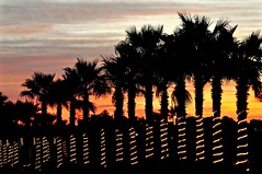 Festive Mexico (The Spirit of the World ( On and Off)) Tags: rockypoint puertopenascofishingvillagevillagesonaramexicoskypalmspalmtrees trees landscape colors sunset sun light dusk colorful lights decorative party tinylights