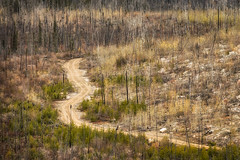 'From Vegas to Nowhere' (Canadapt) Tags: road trees forest fire newgrowth
