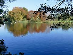 Poynton Pool (HJ in Ches) Tags: poynton poyntonpool cheshire park parkland autumn autumnal lake pool water trees swan pond