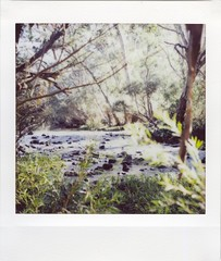 Across the Stream (mortiemctavern) Tags: roidweek2018 lomoinstant instax forest stream nature day2