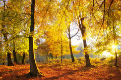 Autumn wood (Marco Allegro) Tags: italy