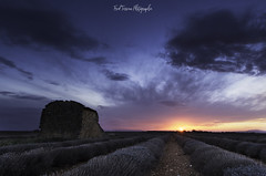 Sunset on lavender (freuddy) Tags: lavande lavender sunset sun clouds cloud france provence valensole nuage colour