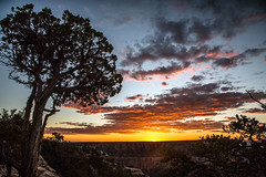 Grand Canyon tree sunset. (Chris Firth of Wakey.) Tags: grandcanyon southrim arizona