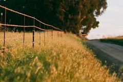 Fence (Semjaja) Tags: fence sunset asahipentaxsp1000 sp1000 spotmatic steinheilculminar135mmf45 steinheil culminar fujifilm fujifilmc200 film filmlives filmsnotdead ishootfilm shootfilm shotonfilm onfilm analogue classiccamera southafrica