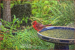 Fun in the sprinklers ... (NancySmith133) Tags: sprinklers godsgarden frontyardbirds centralfloridausa naturescarousel