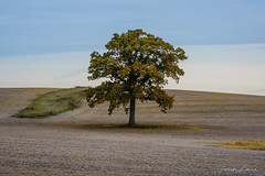 """Frosty October Morning"" (D A Baker) Tags: october autumn frost landscape farm field tree alone cool colors morning sunrise northern indiana"