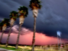 just another storm from spain (lualba) Tags: conventodaorada monsaraz alqueva storm clouds wolken sturm wetter himmel sky weather palmtrees palmen pink