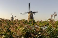 Windmills at Kinderdijk (rschnaible) Tags: kinderdijk netherlands work production water control windmills power pump reeds landscape house home architecture