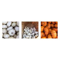 Little pumpkins. 🎃 (jeanne.marie.) Tags: iphoneography iphone7plus mosaic triptych patternsinnature white orange basket traderjoe's autumn pumpkins 100xthe2018edition 100x2018 image79100