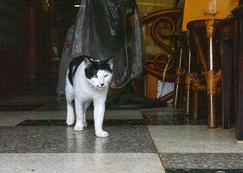 Taipei Dadaocheng - cat