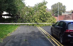 Photo of a fallen tree in Ashton, Preston after last weeks storm (Tony Worrall) Tags: preston lancs lancashire city welovethenorth nw northwest update place location uk england north visit area attraction open stream tour country item greatbritain britain english british gb capture buy stock sell sale outside outdoors caught photo shoot shot picture captured ashtononribble ashton autumn fallentree storm cut down stormy weather