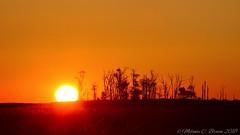 Bombay Hook Eagle's Nest Sunrise (EllieJanie Maybelline) Tags: bombayhook sunrise nationalwildliferefuge nwr de delaware canon7d canon100400 lucille orange glow 102918 eaglesnest