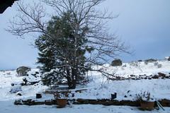 Snowy Morning (Anna Gurule) Tags:
