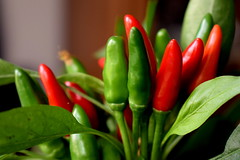 Home little garden in flower pot (jano45) Tags: flower peppers hotpeppers chilli