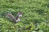 Squirrel! (Andreia M. Oliveira) Tags: londres london esquilo squirrel nature